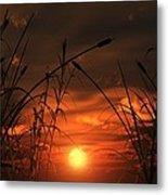 Swamp Sunset  Metal Print