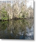 Bold Cypress Reflection Metal Print