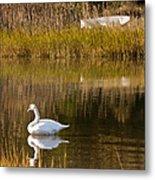 Swan And Boat 2 Metal Print