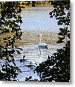 Swan And Ducks Through Trees Metal Print