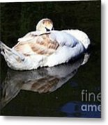 Swan Asleep Metal Print