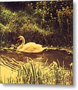 Swan At The Golden Lake Metal Print