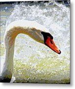 Swan - Beautiful - Elegant Metal Print