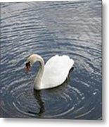 Swan Circles Metal Print