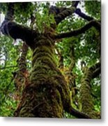 Swan Creek Tree Metal Print
