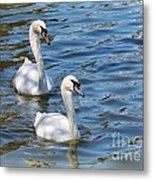 Swan Day Metal Print