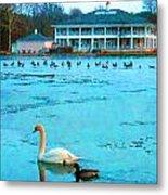 Swan Duck Geese Metal Print