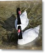 Swan Duo Metal Print by Marty Koch