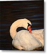 Swan Grooming Metal Print