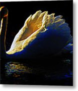 Swan In Golden Light Metal Print