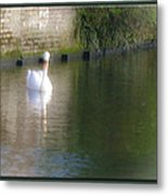 Swan In The Canal Metal Print