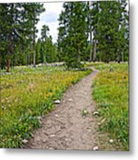 Swan Lake Trail In Grand Teton National Park-wyoming Metal Print
