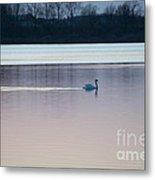Swan On Lake At Dusk Metal Print