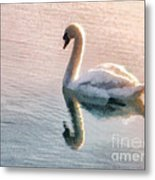Swan On Lake Metal Print by Pixel  Chimp