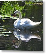 Swan On Lake Sabbatia Metal Print