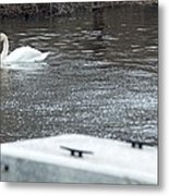 Swan On The Water Metal Print