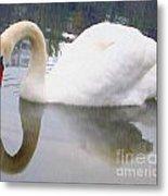 Swan Reflection Metal Print