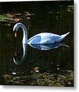 Swan Solitude Metal Print