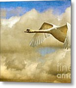 Swan Song Metal Print by Lois Bryan