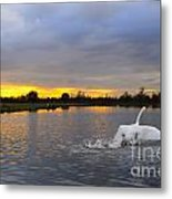 Swan Taking Off Metal Print