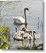 Swan With Signets 2 Metal Print