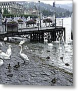 Swans And Ducks In Lake Lucerne In Switzerland Metal Print