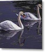 Swans And Signet Metal Print