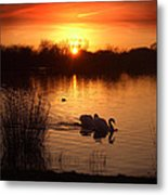 Swans At Sunset Metal Print by Ed Pettitt