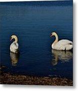 Swans Belle Isle Metal Print
