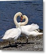 Swans Courting Metal Print