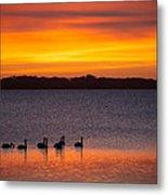 Swans In The Sunrise Metal Print