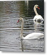 Swans On The Lake - Limited Edition Metal Print