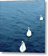 Swans On The Vltava River, Prague Metal Print