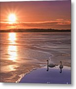 Swans Sunrise Metal Print