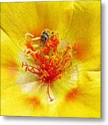 Sweat Bee On Rock Rose Metal Print