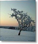 Swedish Winter Metal Print by Carola Ann-Margret Forsberg