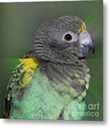 Sweet Baby Meyers Parrot Metal Print
