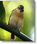 Sweet Bird On Branch Metal Print