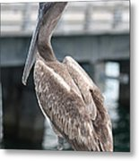 Sweet Brown Pelican - Digital Painting Metal Print