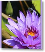 Sweet Dragonfly On Purple Water Lily Metal Print