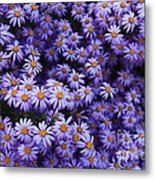 Sweet Dreams Of Purple Daisies Metal Print