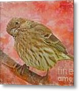 Sweet Female House Finch 3 - Digital Paint Metal Print