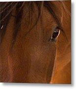 Sweet Horse Face Metal Print