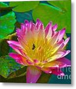Sweet Lilly Nectar Metal Print