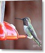 Sweet Little Hummingbird On Feeder Metal Print