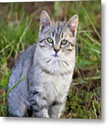 Sweet Little Tabby Kitten Metal Print
