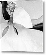 Sweet Magnolia Blossom Metal Print