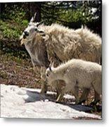 Sweet Mama Goat Metal Print