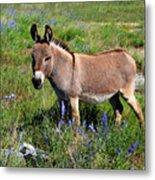 Sweet Miniature Donkey Metal Print