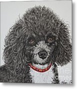 Sweet Miss Molly The Poodle Metal Print